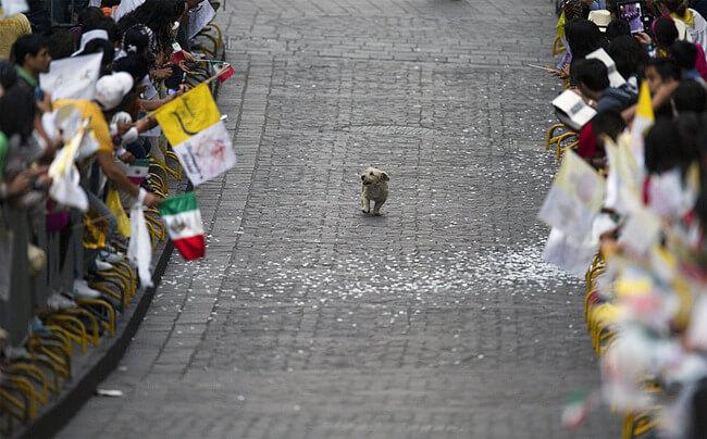 amazing dog photographs 8