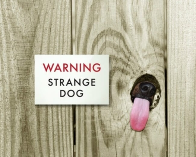 beware of dog - strange dog