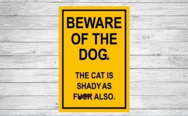 beware of dogs signs - cat is shady 13