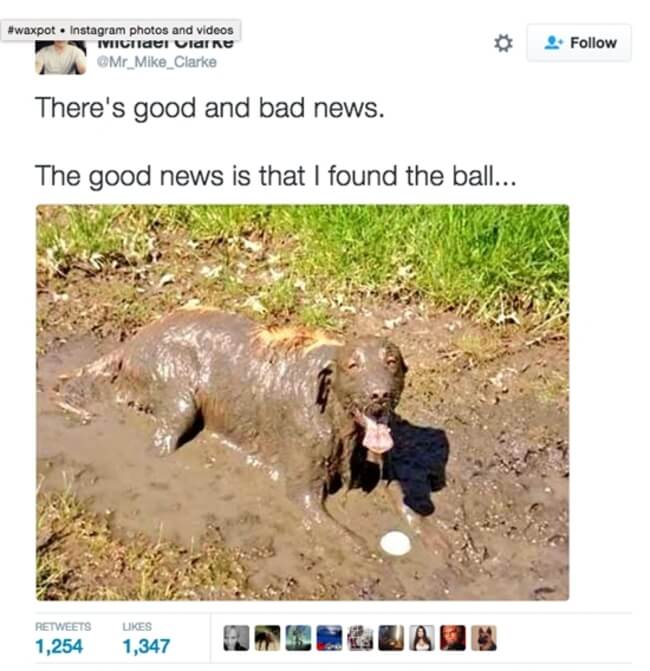 dogs were the best 14