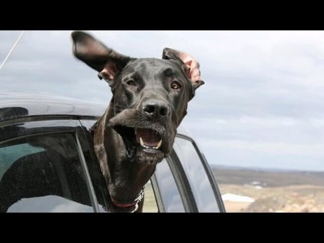 Why Dogs Love Car Rides So Much 2