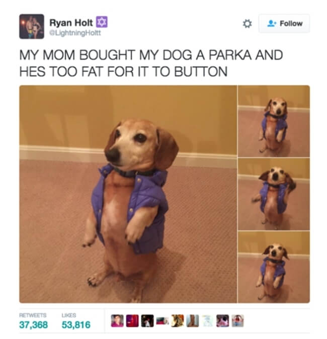 dogs are the best 9