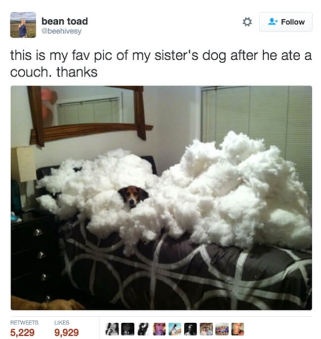 dogs are the best 7