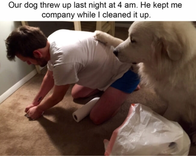 dogs are the best 2