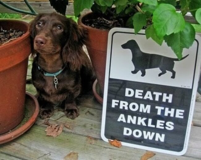beware of dog signs - death for ankles15