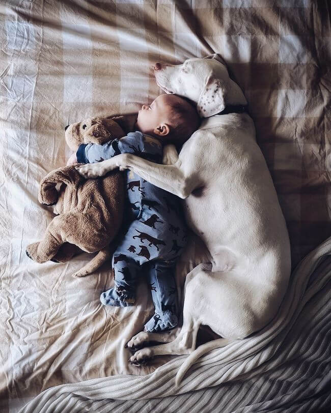dog and baby nap time 8