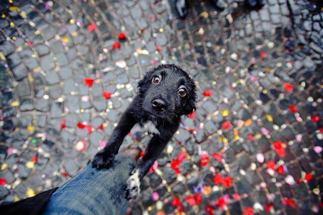 amazing dog photographs 10
