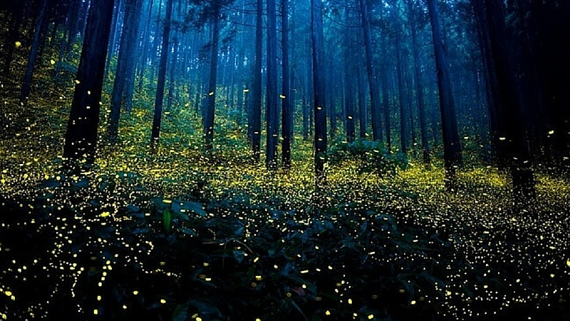 magical fireflies