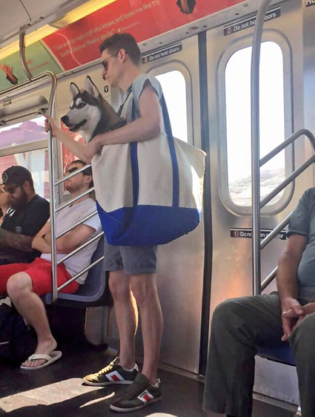 Dogs Are Not Allowed On NYC Subway 1