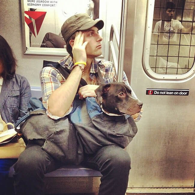 Dogs Are Not Allowed On NYC Subway 3