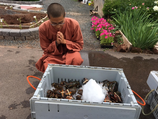 monks buy lobsters and release them in the ocean