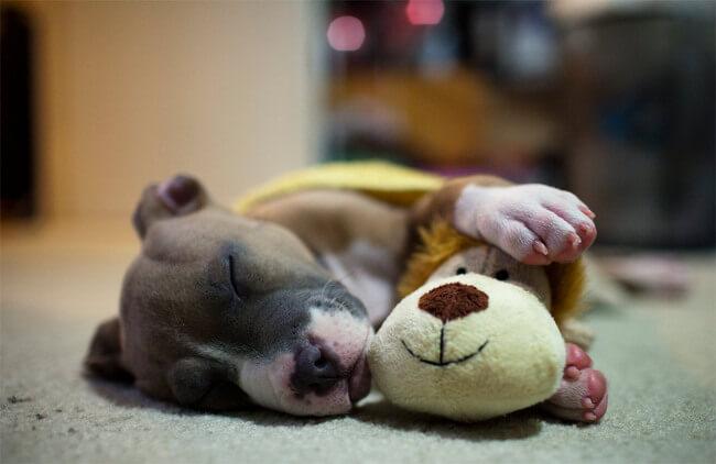 amazing dog photographs 7