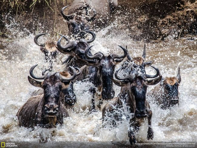 National Geographic Photographer of the year 2016 31