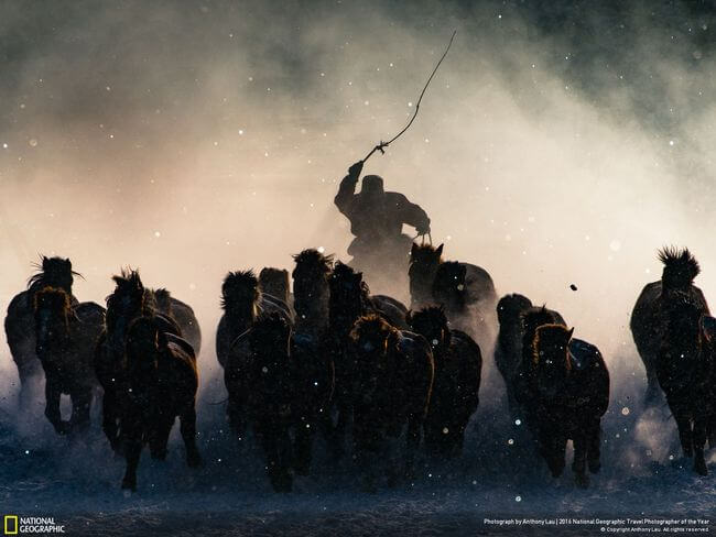 National Geographic Photographer of the year 2016 10