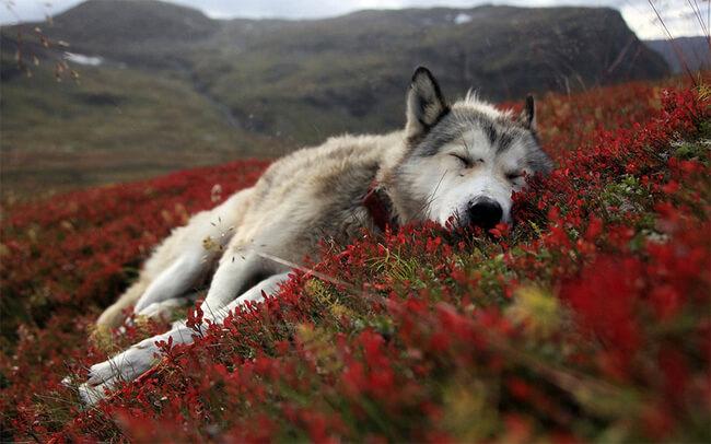 amazing dog photos 1