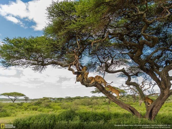 The National Geographic Traveler Photo Contest 41