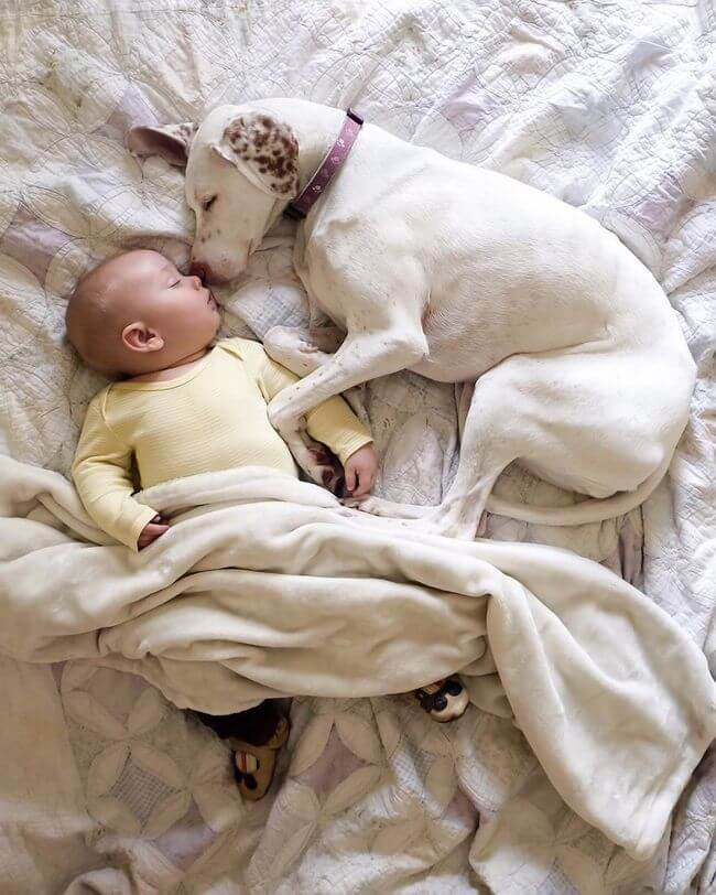 dog and baby nap time 9