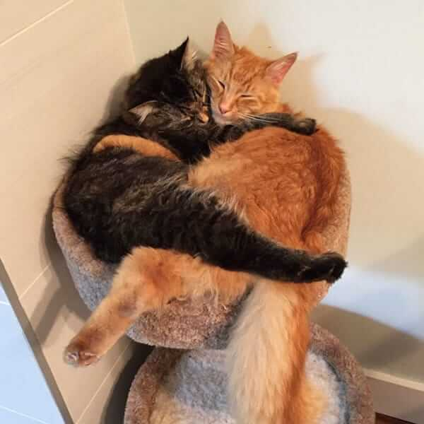 Cats Can't Stop Cuddling 5 (1)