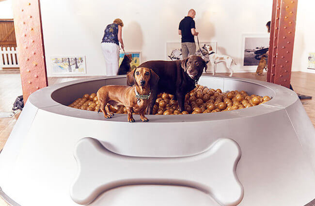 interactive art for dogs 3