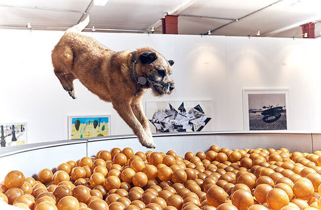 interactive art for dogs 4