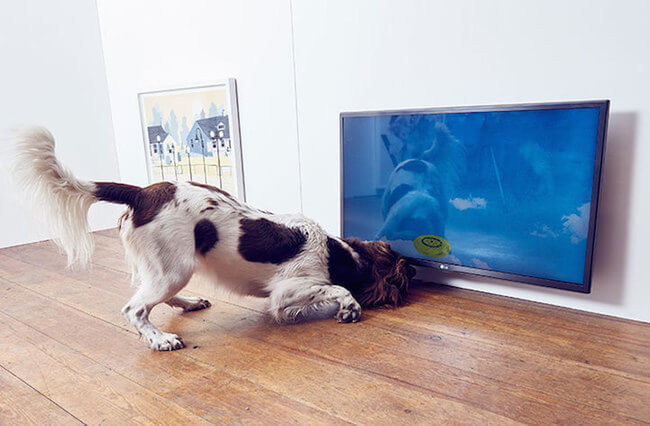interactive art for dogs 6
