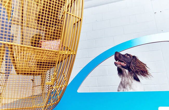 interactive art for dogs 7