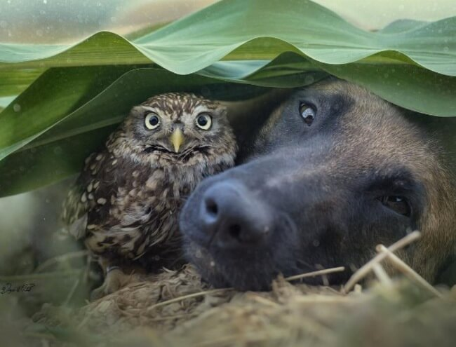 dog and owl friends 2