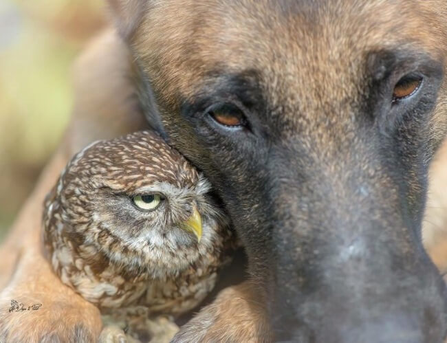 dog and owl friends 4