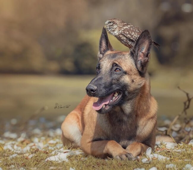 dog and owl friends 5