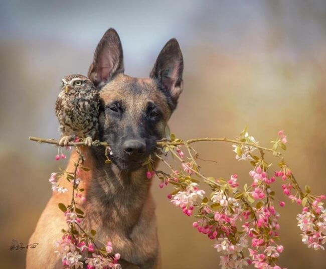 dog and owl friends 6