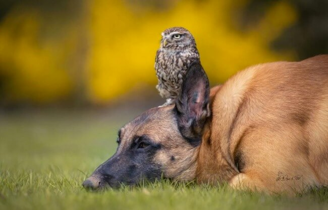 dog and owl friends 7