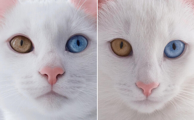 twin cats 2