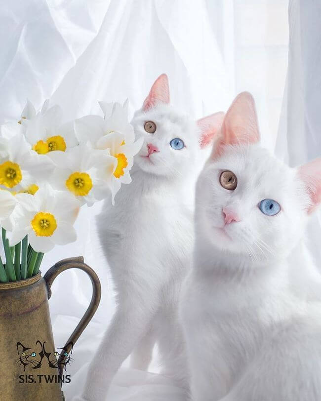 twin cats 10