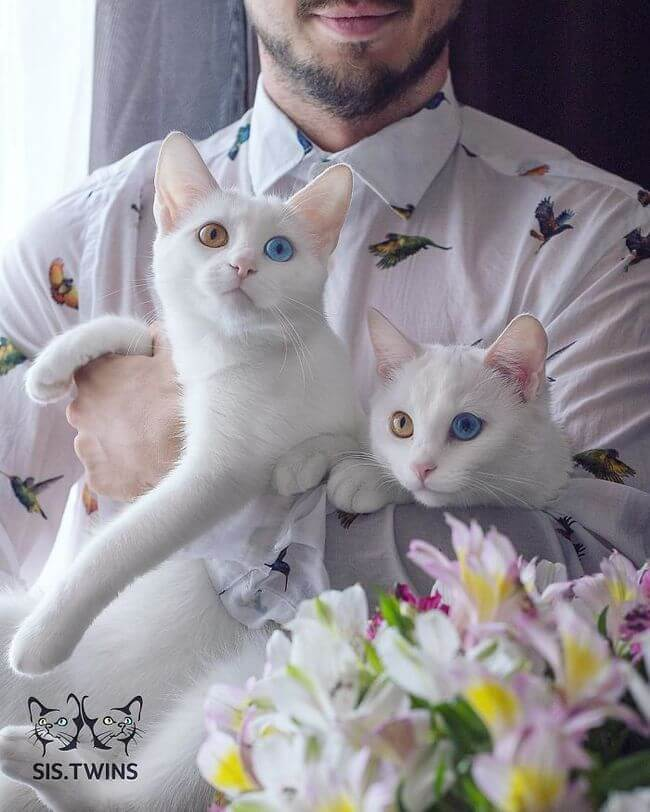 twin cats 13