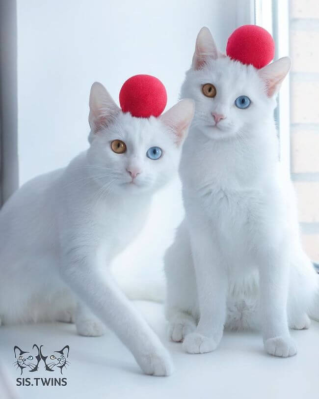 twin cats 3