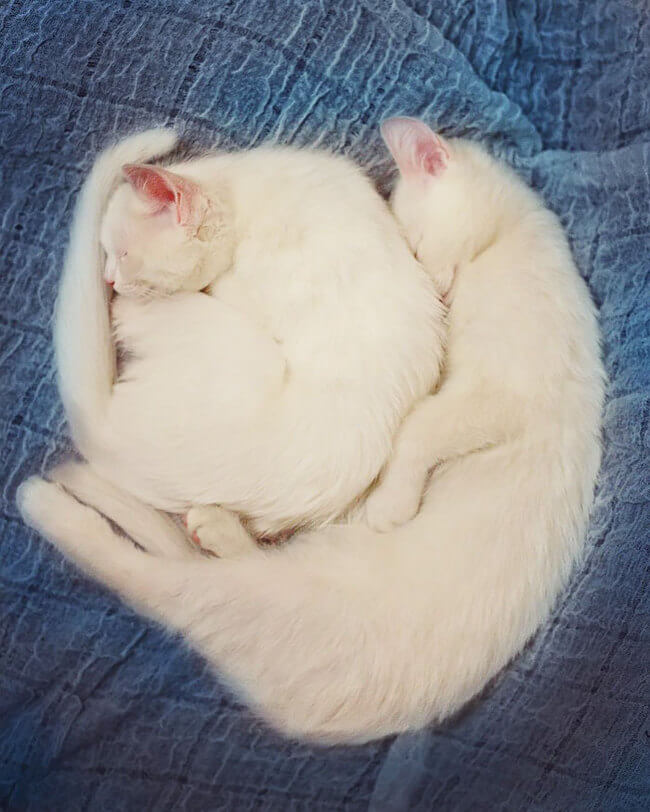 twin cats 12
