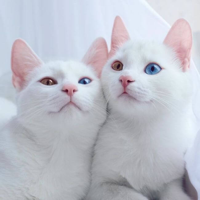 twin cats 1