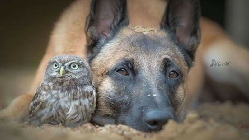 dog owl best friends (1)