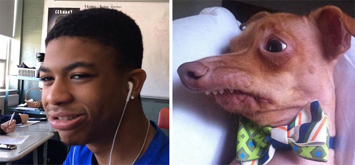 humans look like dogs 20 (1)