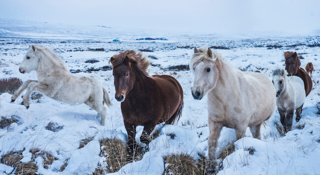 iceland photos 11 (1)