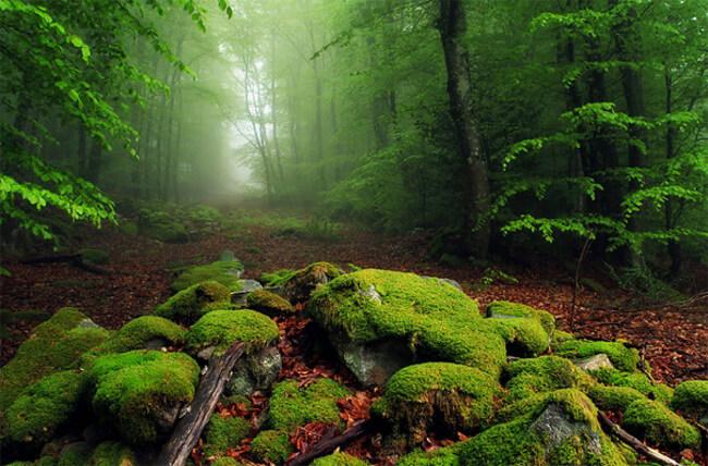 beautiful landscape 31