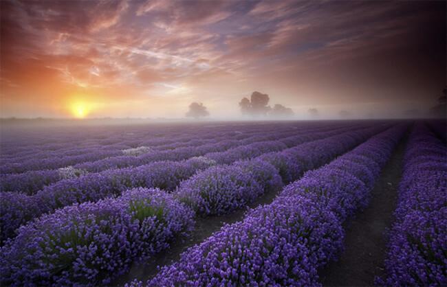 awesome landscape 1