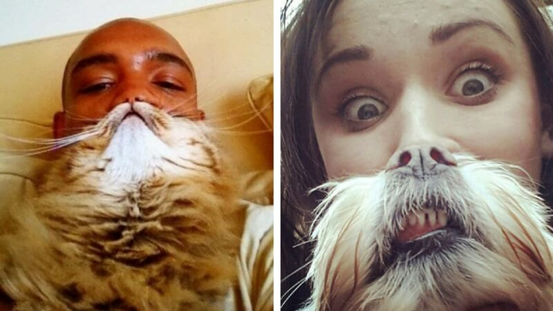 pet beards feat (1) (1)