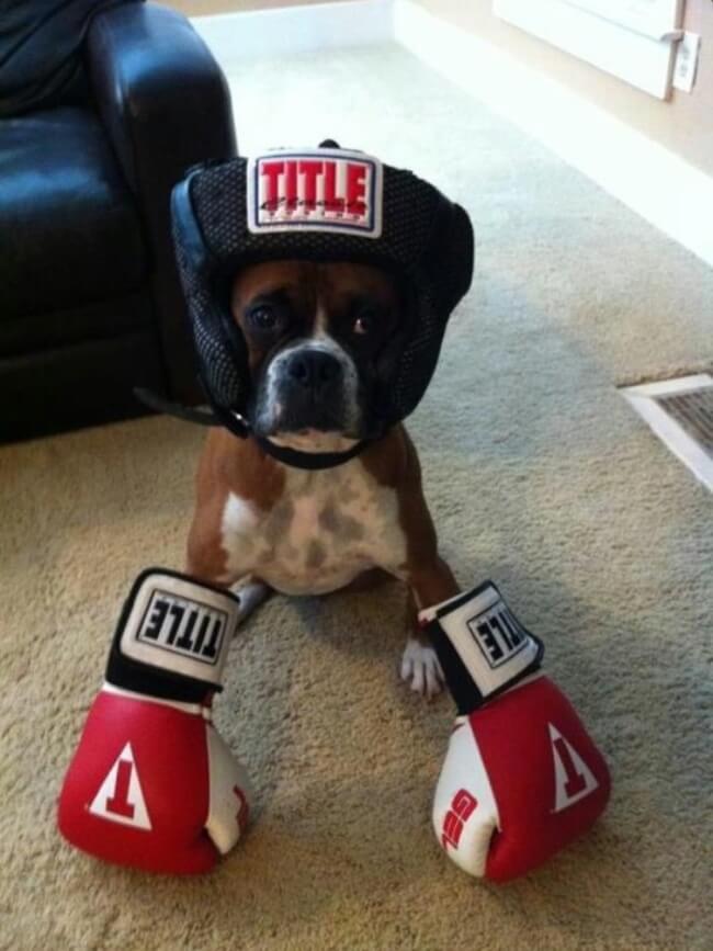 baby boxers 6