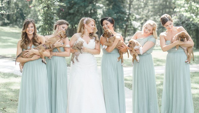 Puppies wedding photos (1)