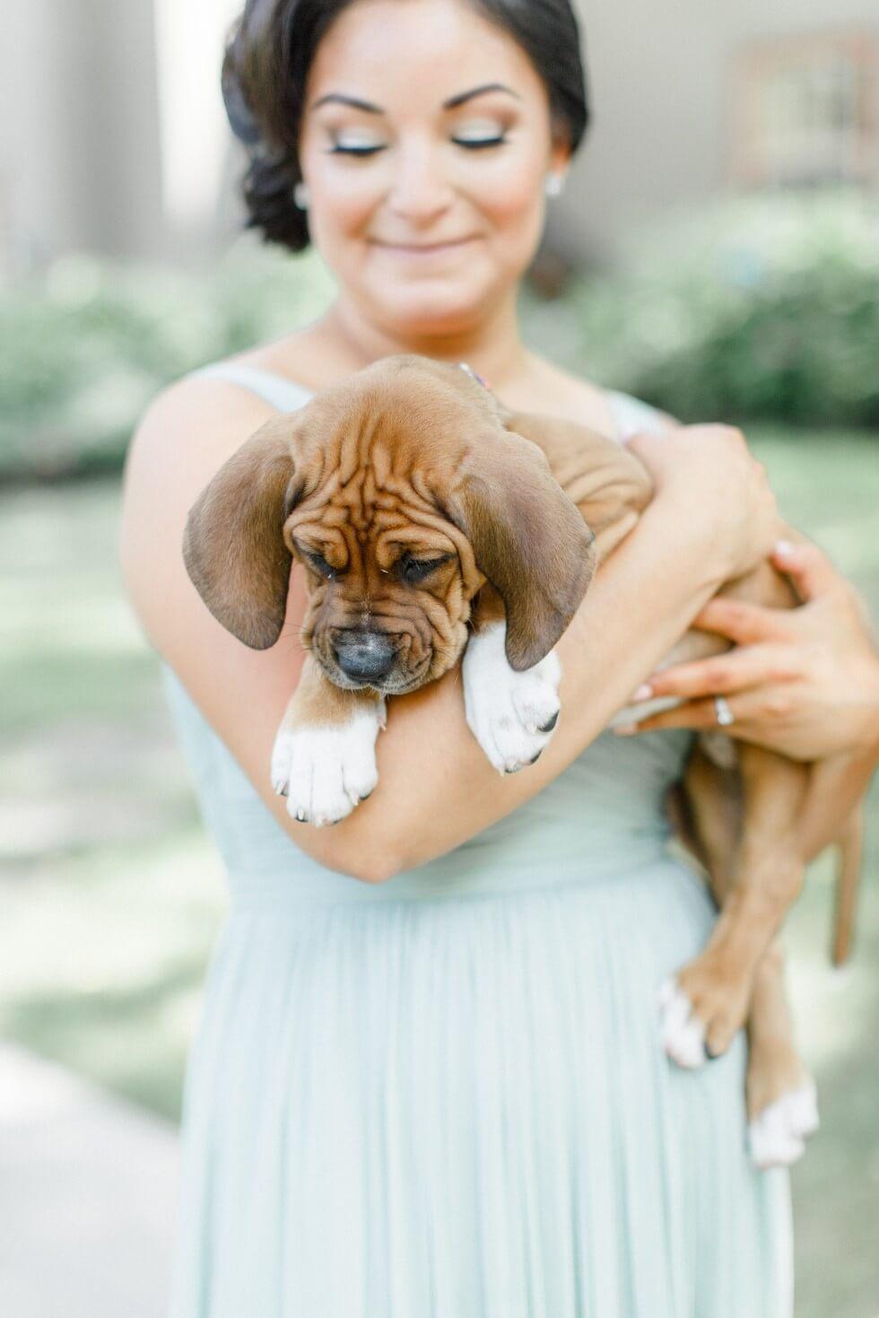 Puppies wedding photos 4 (1)
