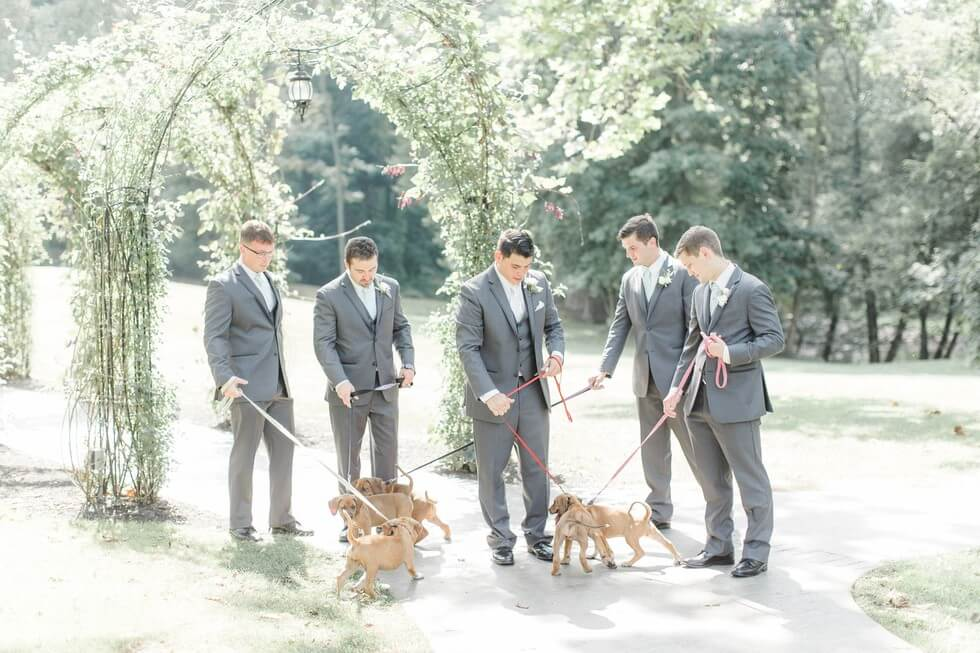 Puppies wedding photos 6 (1)