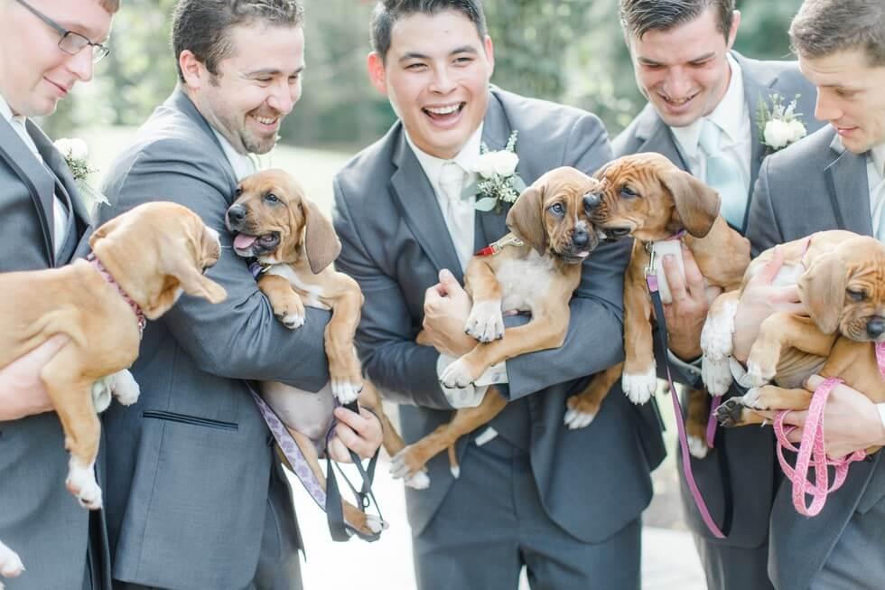 Puppies wedding photos 7 (1)
