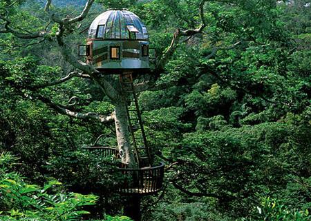 amazing tree houses 13 (1)