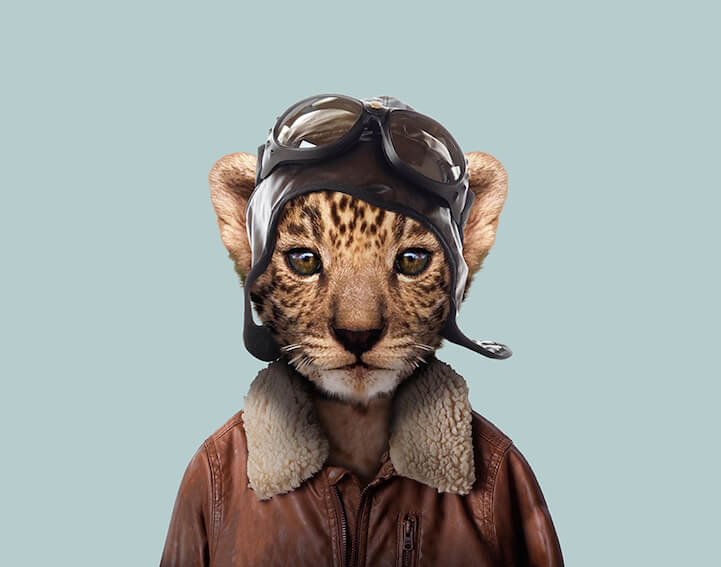 animals humans dressed cute portraits partal yago super leopard cub